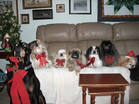 Merry Christmas, Carol from Tori, Teddy, Pop, Beau, Domino, Maggie and Pumpkin (oh, and from K and C).