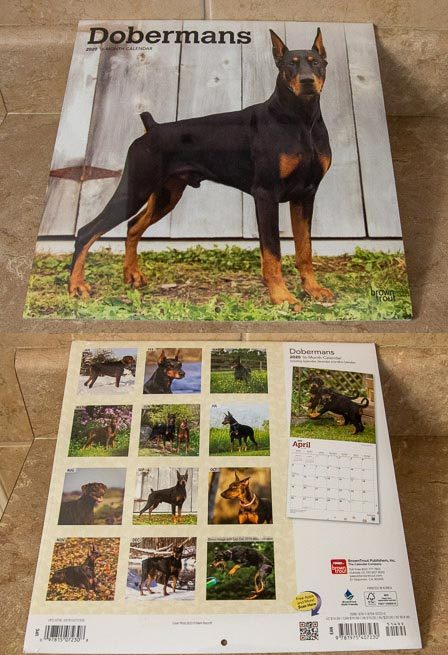 2020 Doberman Wall Calendar - 16 Months - 