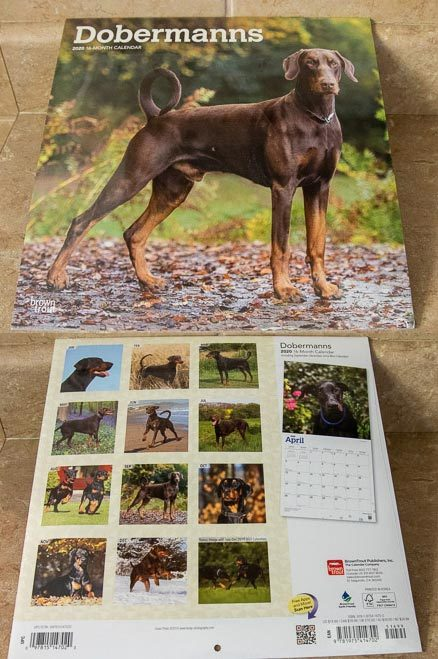 2020 Doberman Wall Calendar - 16 Months